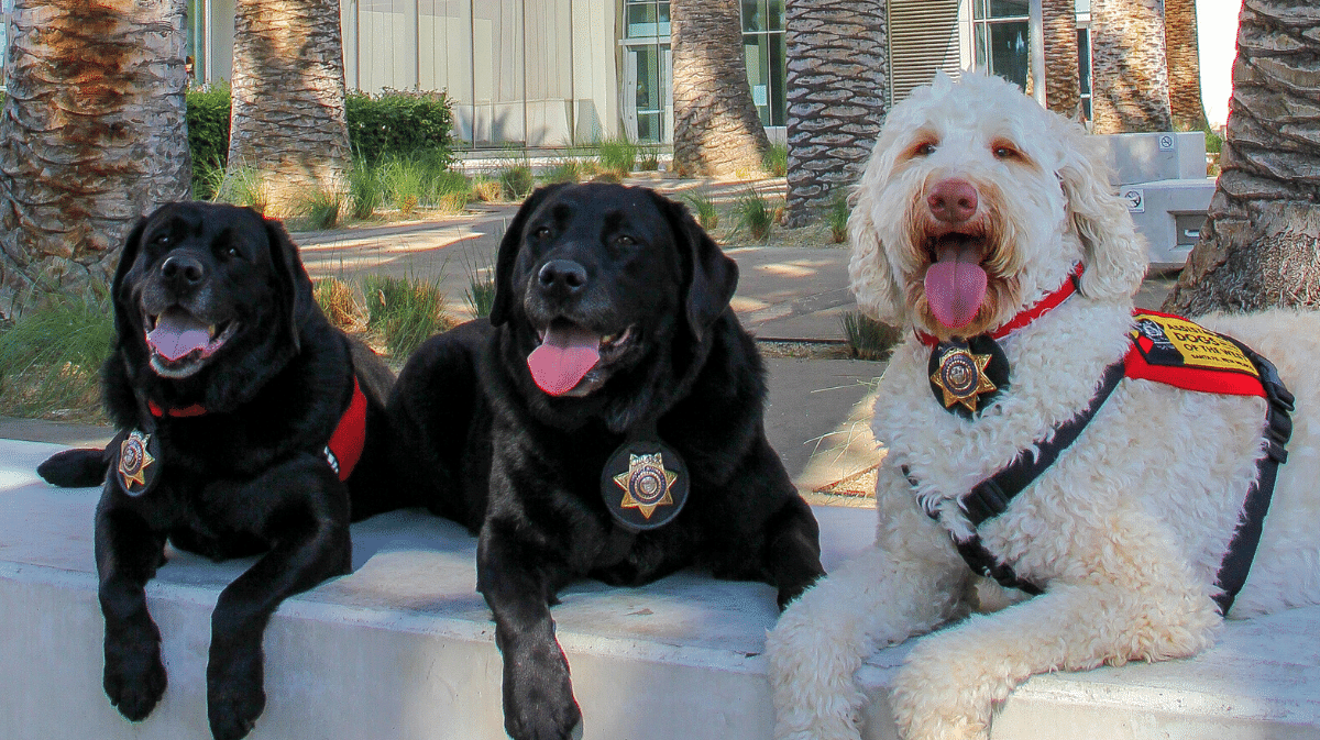Courthouse facility dogs Lupe, Dozer, and Kirby